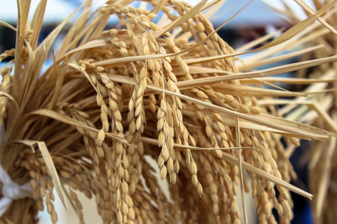 第44回「高槻市農林業祭」に行ってきた話。