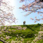 高槻市のオススメ桜スポット5選【定番から穴場まで】