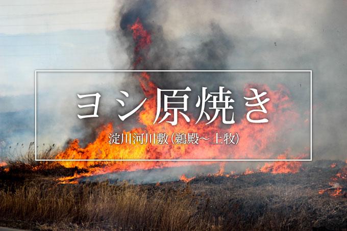 【高槻】淀川河川敷(鵜殿〜上牧)ヨシ原焼きを見てきた話。