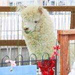 グリーンプラザたかつき1号館の屋上で開催『ふれあい動物村』イベント当日の様子。