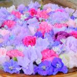 【高槻市】SNSでも大人気!城北通にある石田花店が奉納する野見神社の花手水